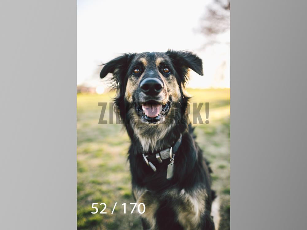 Feb Dogs-052.jpg