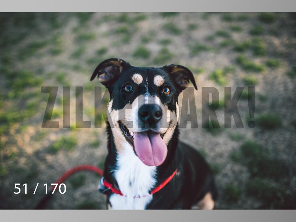 Feb Dogs-051.jpg
