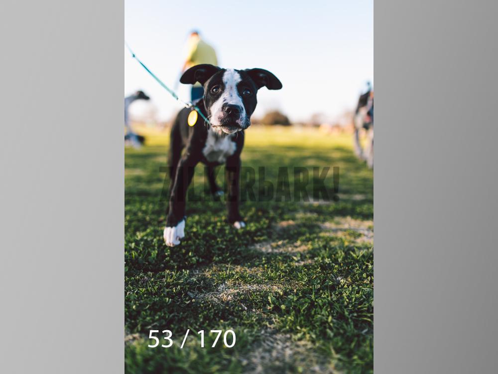 Feb Dogs-053.jpg