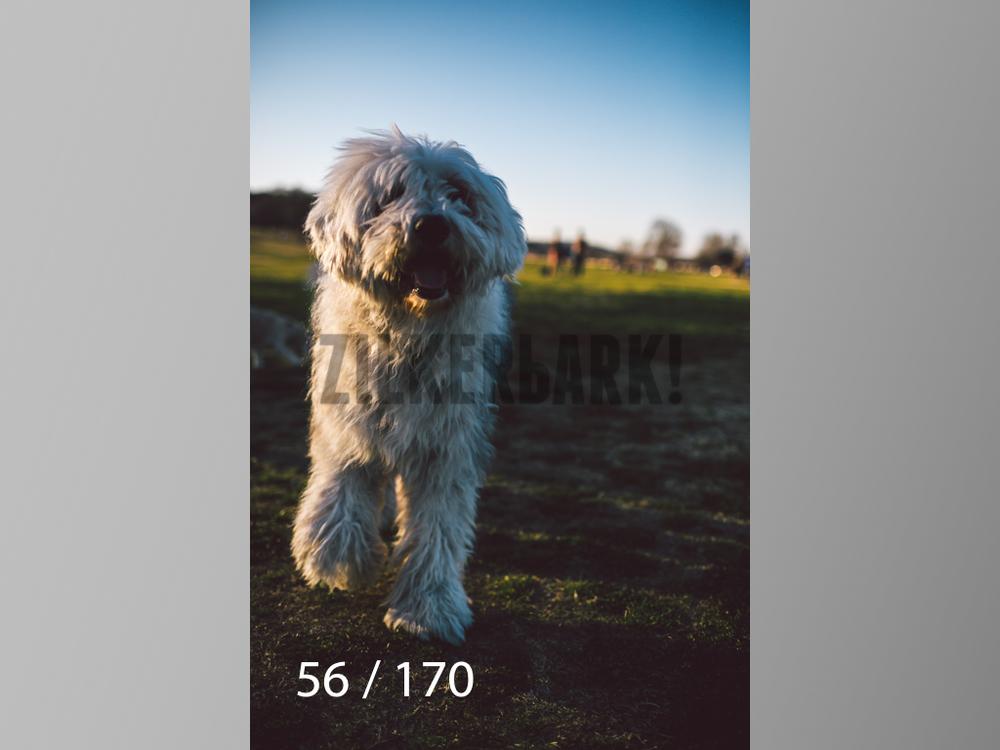 Feb Dogs-056.jpg