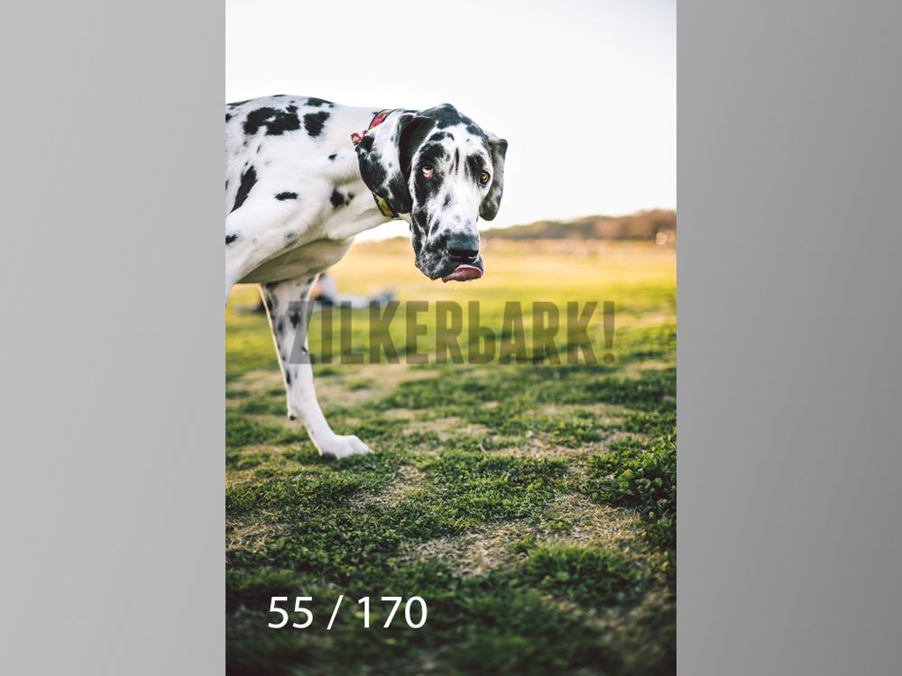 Feb Dogs-055.jpg