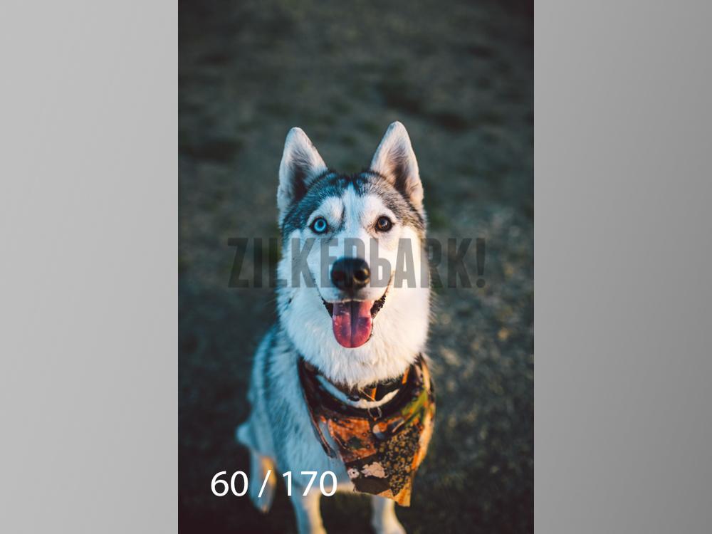 Feb Dogs-060.jpg