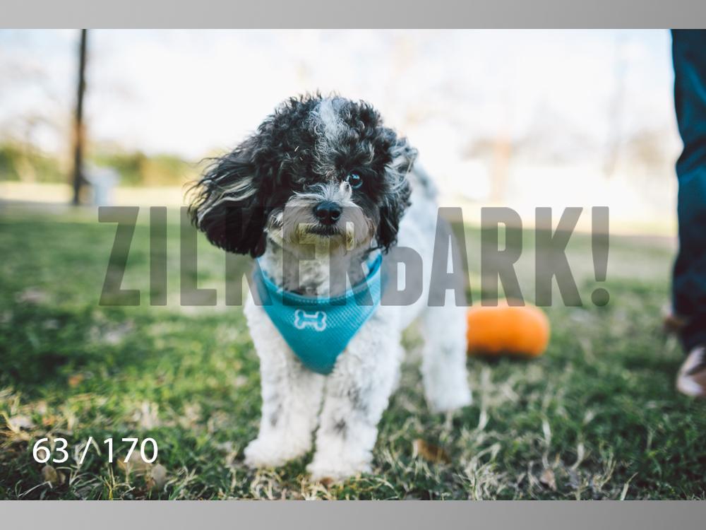 Feb Dogs-063.jpg