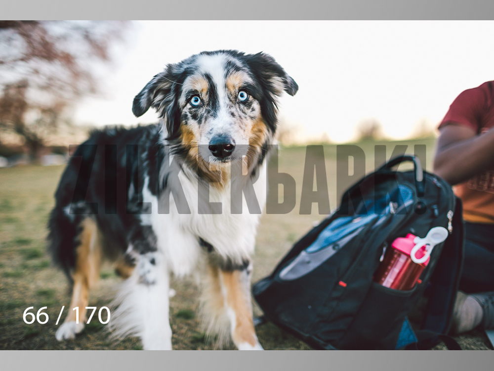 Feb Dogs-066.jpg