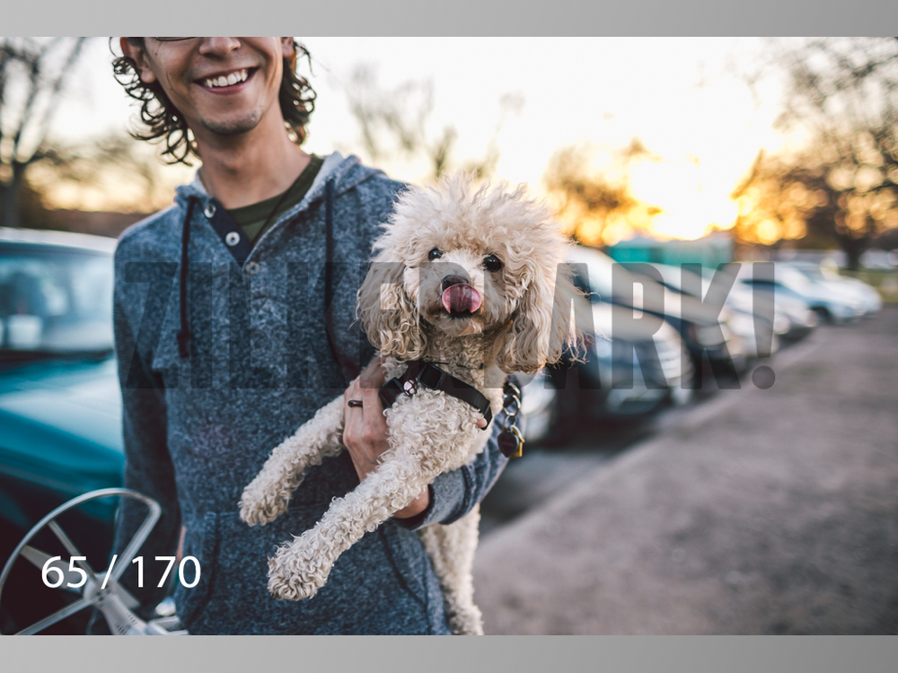 Feb Dogs-065.jpg