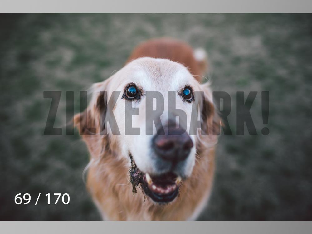Feb Dogs-069.jpg