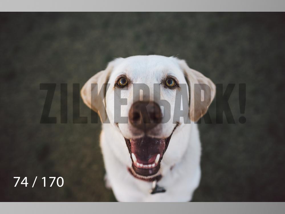 Feb Dogs-074.jpg
