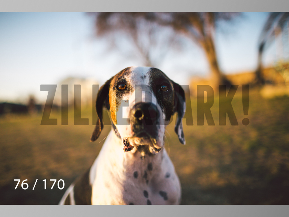 Feb Dogs-076.jpg