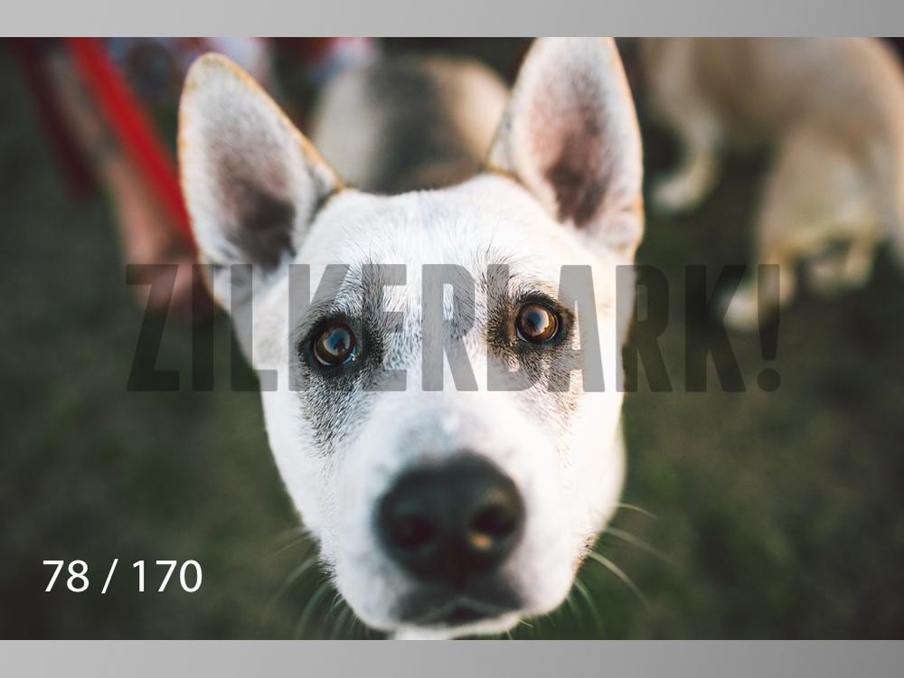 Feb Dogs-078.jpg