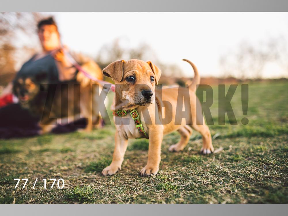 Feb Dogs-077.jpg
