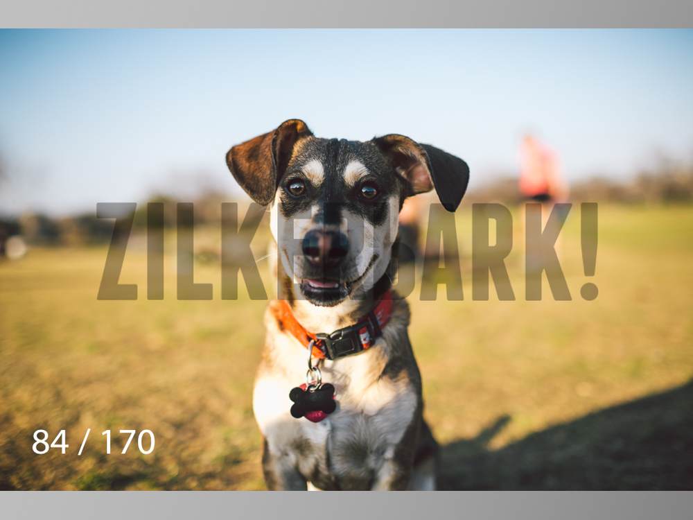 Feb Dogs-084.jpg