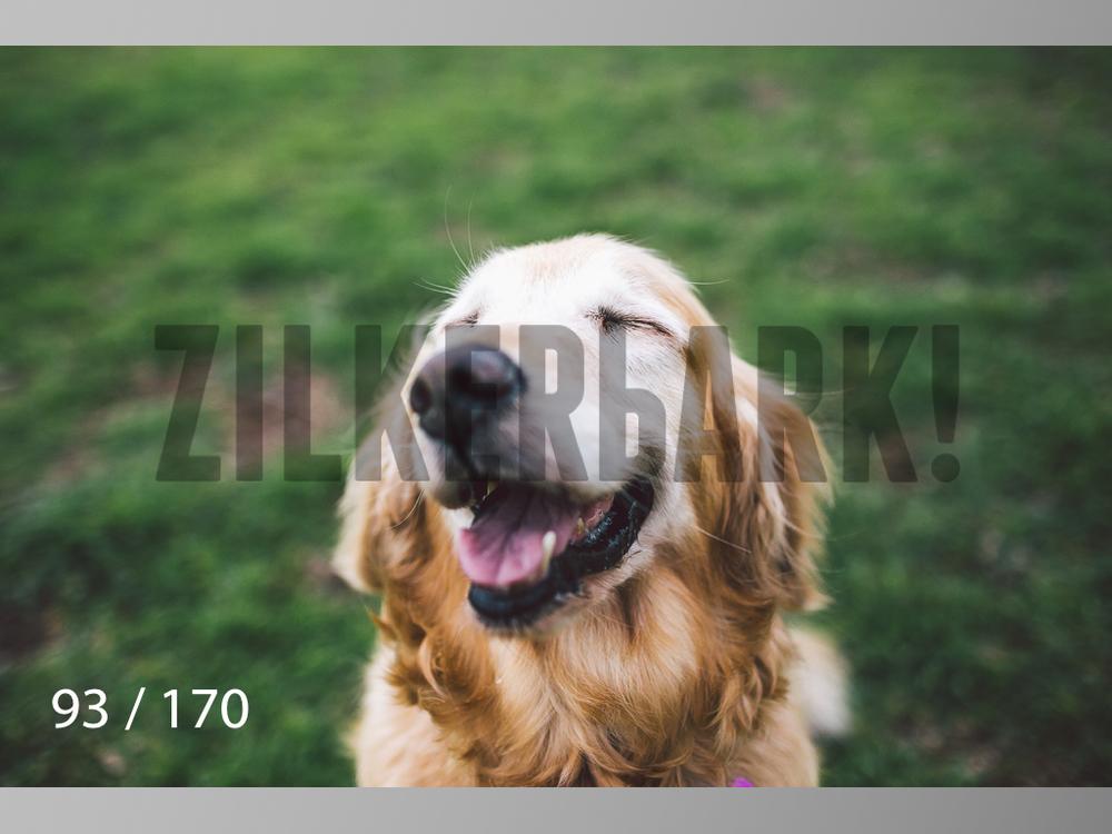 Feb Dogs-093.jpg