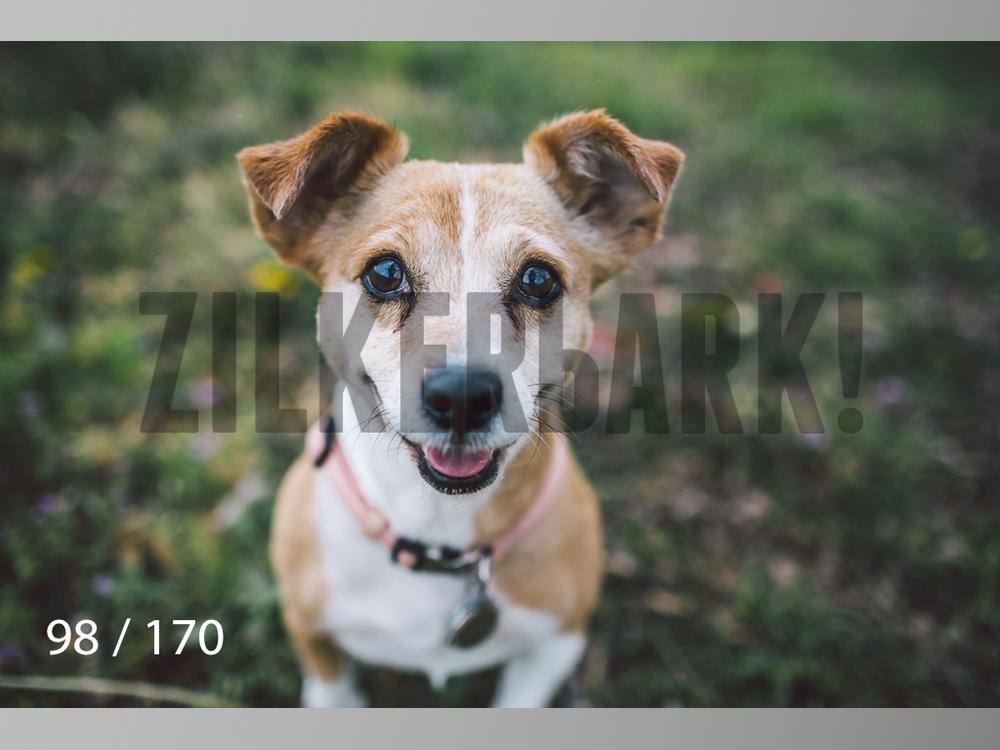 Feb Dogs-098.jpg