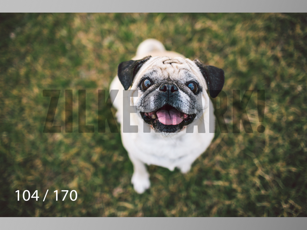 Feb Dogs-104.jpg