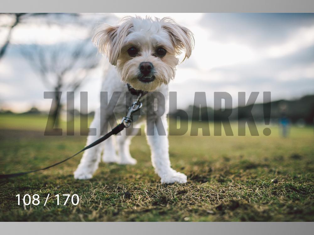 Feb Dogs-108.jpg