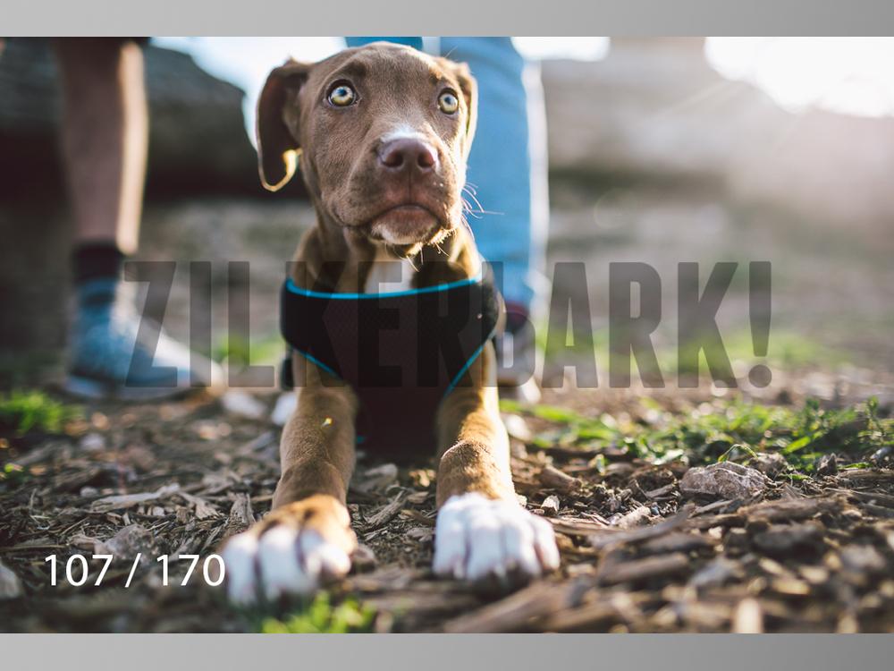 Feb Dogs-107.jpg