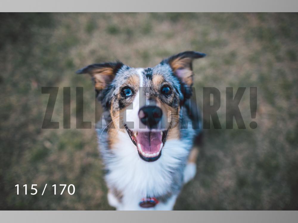 Feb Dogs-115.jpg