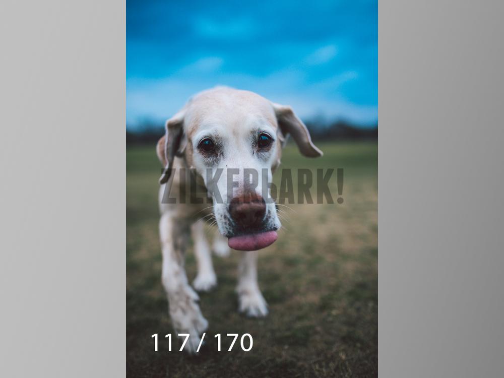 Feb Dogs-117.jpg