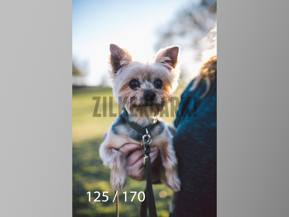 Feb Dogs-125.jpg