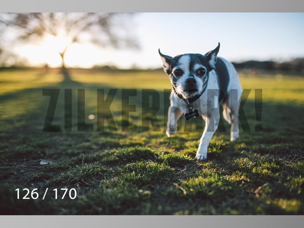 Feb Dogs-126.jpg