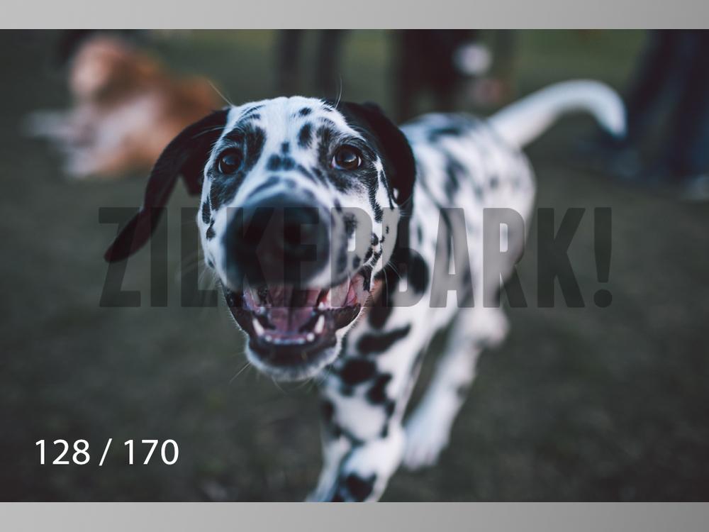 Feb Dogs-128.jpg