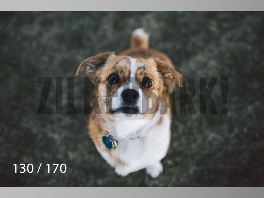 Feb Dogs-130.jpg