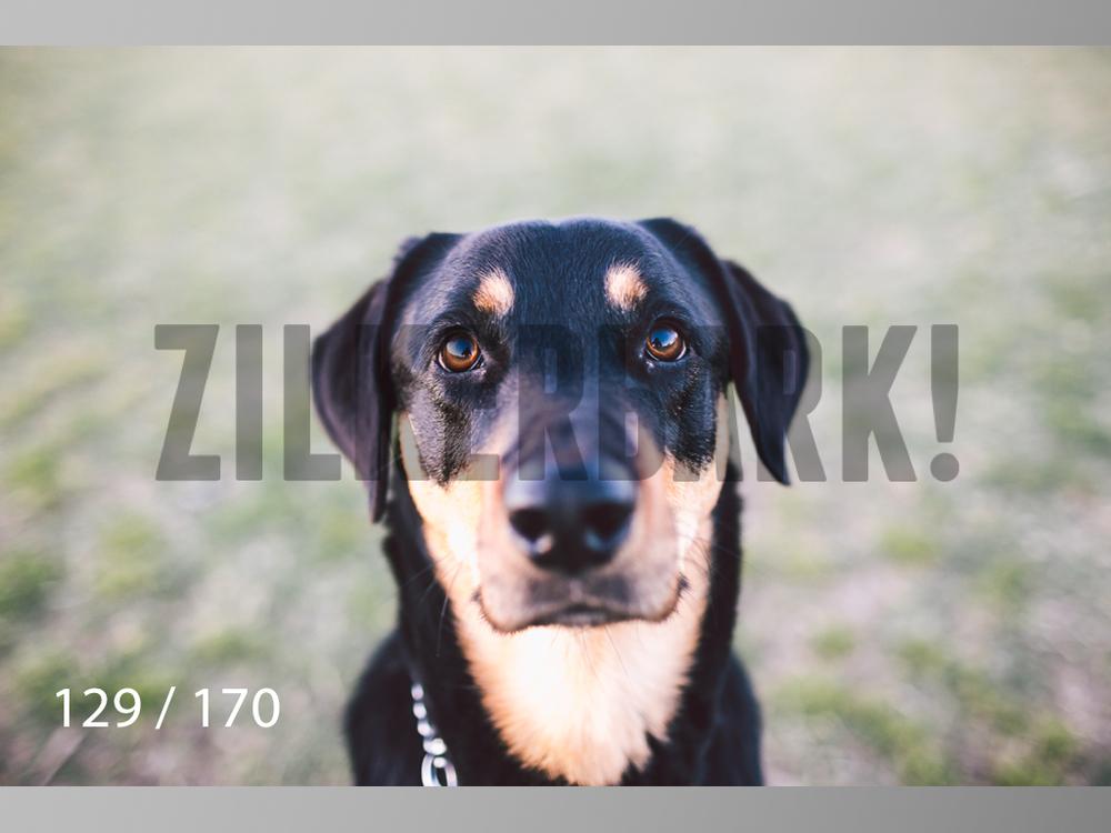 Feb Dogs-129.jpg