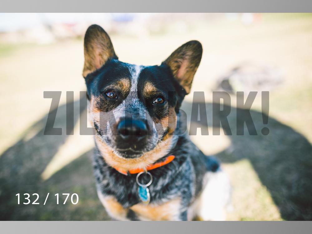 Feb Dogs-132.jpg