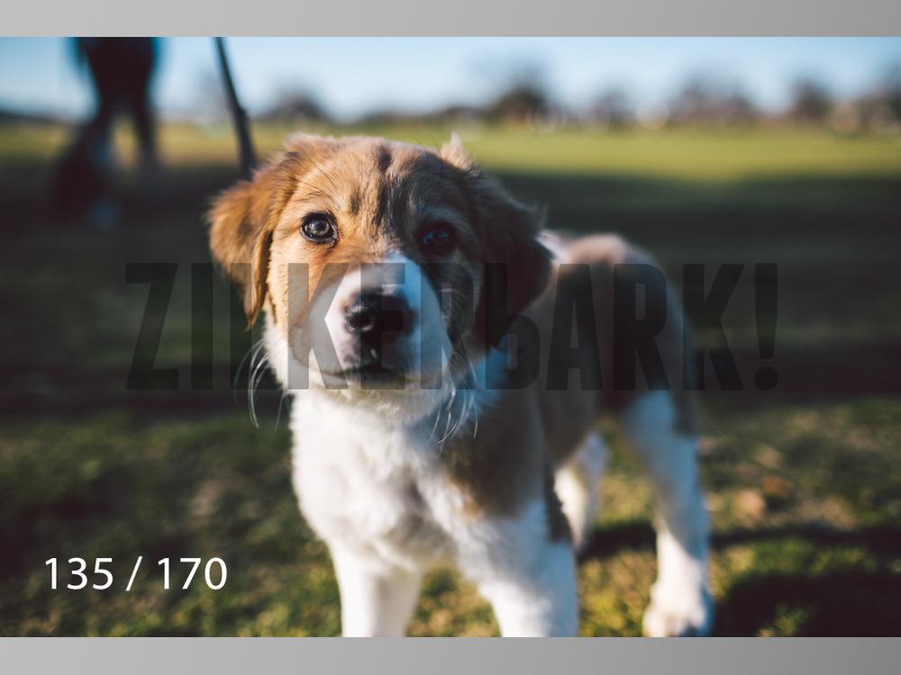 Feb Dogs-135.jpg