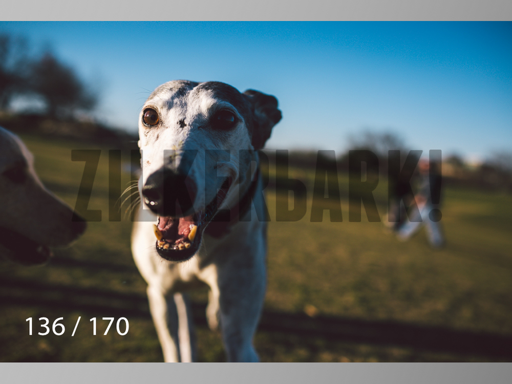 Feb Dogs-136.jpg