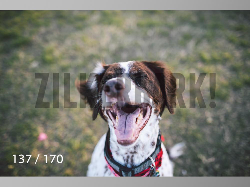 Feb Dogs-137.jpg