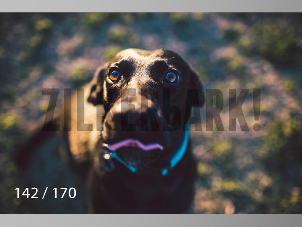 Feb Dogs-142.jpg