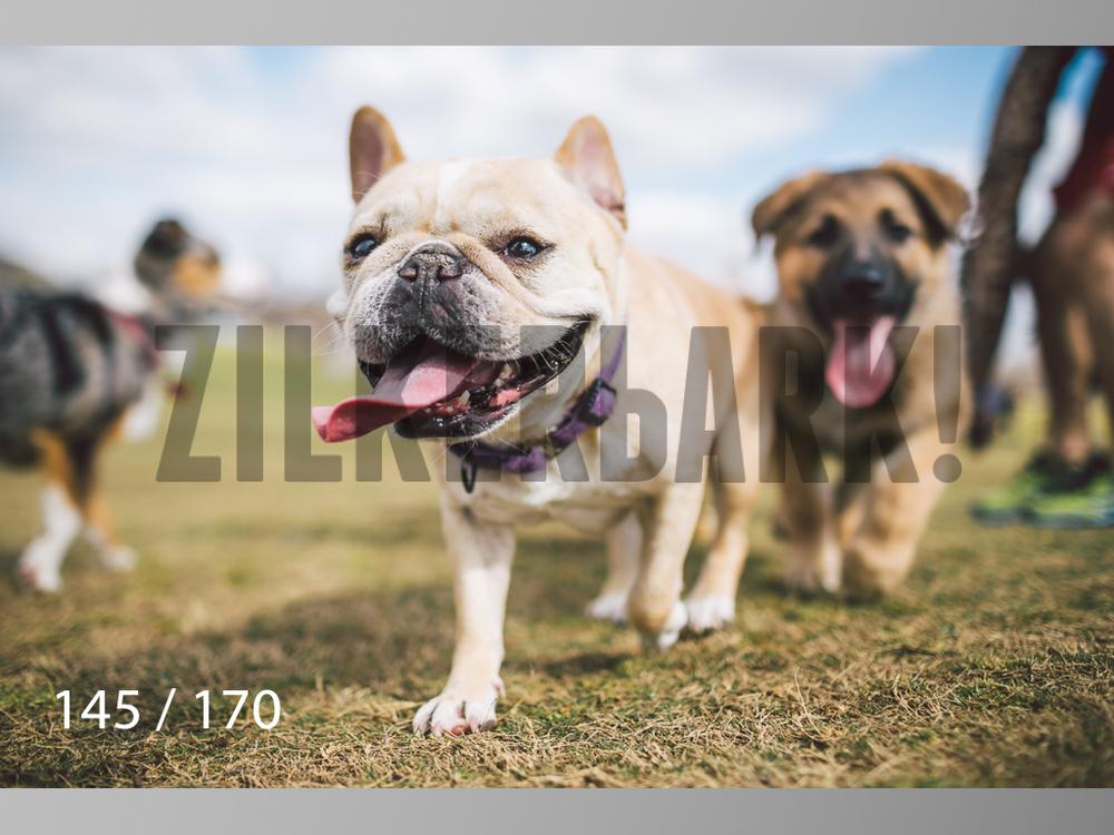 Feb Dogs-145.jpg