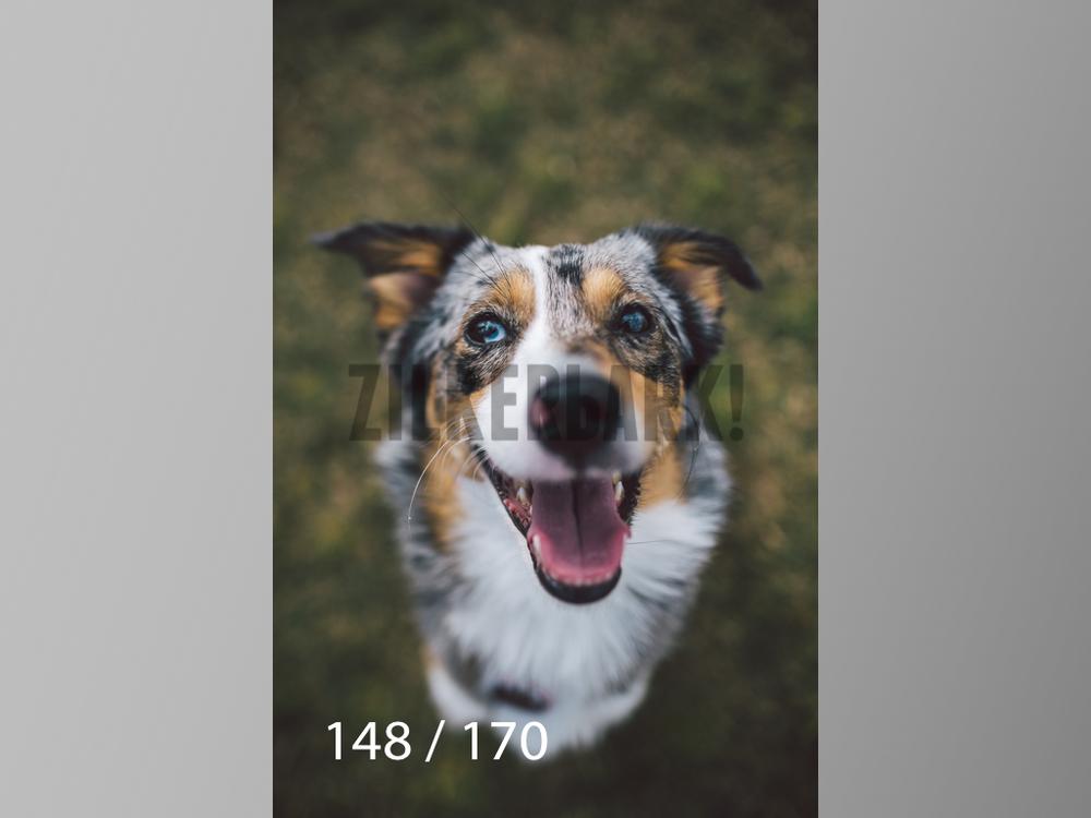 Feb Dogs-148.jpg