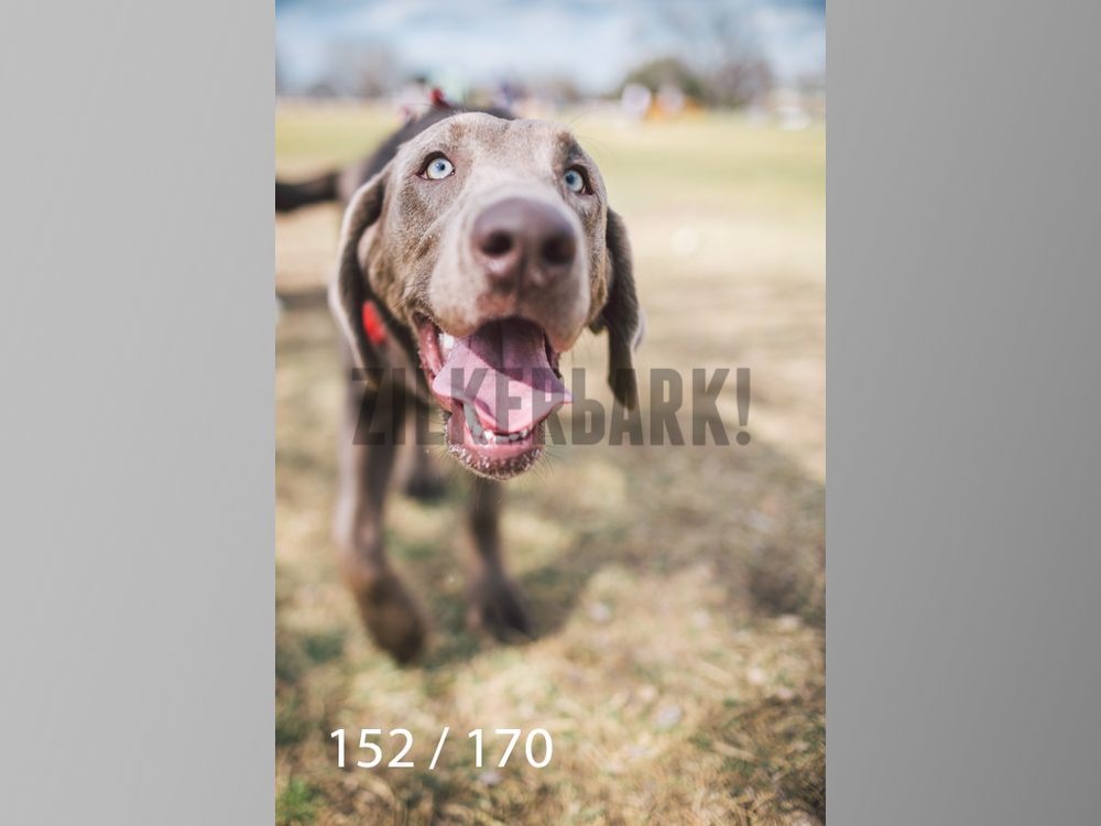 Feb Dogs-152.jpg