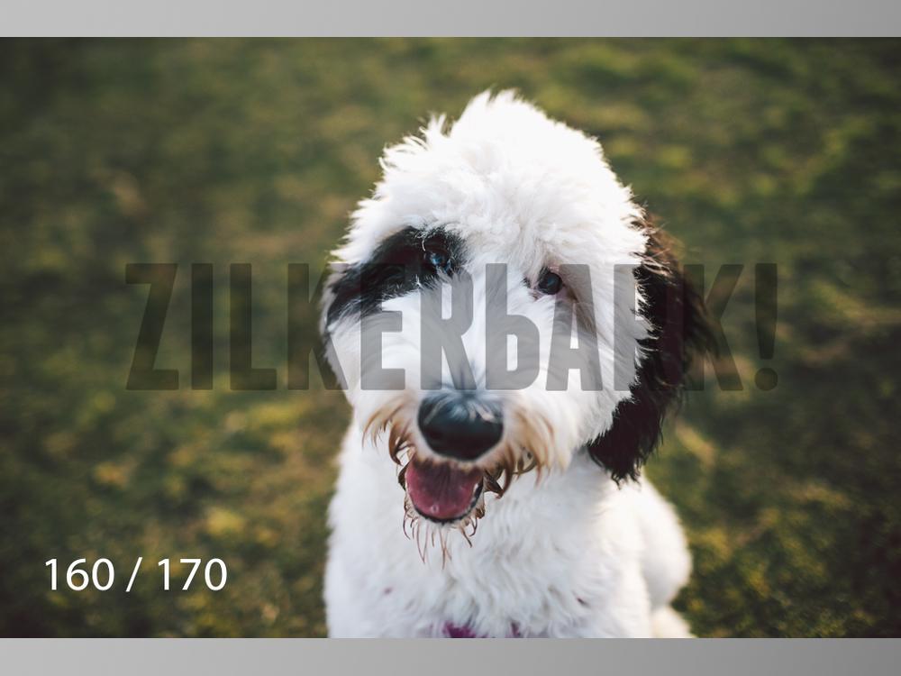 Feb Dogs-160.jpg
