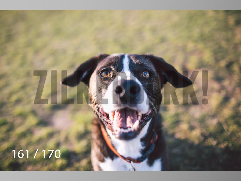 Feb Dogs-161.jpg