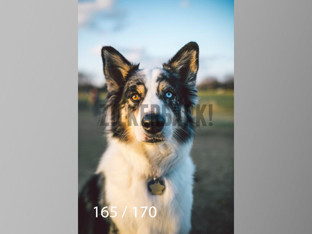 Feb Dogs-165.jpg