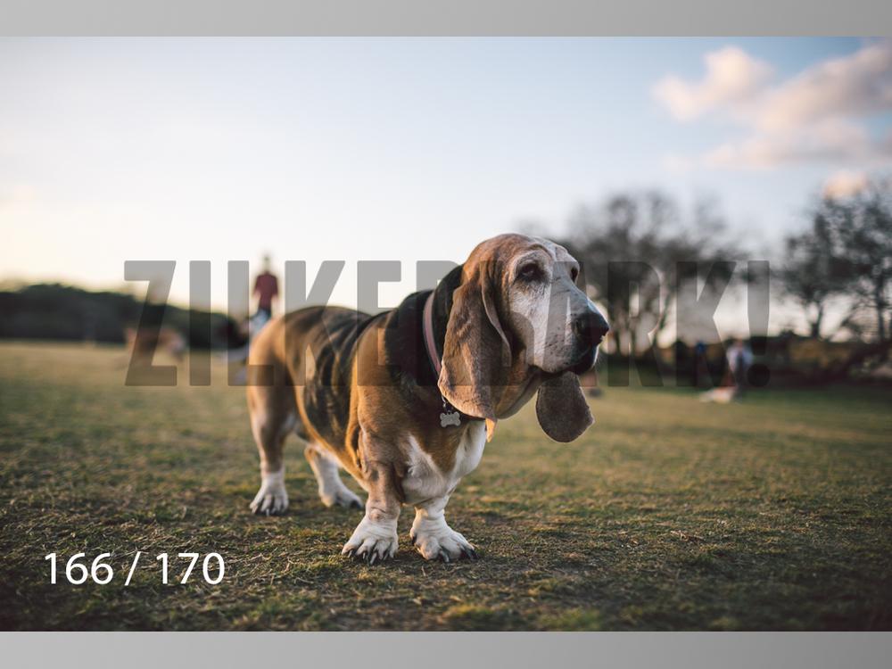 Feb Dogs-166.jpg