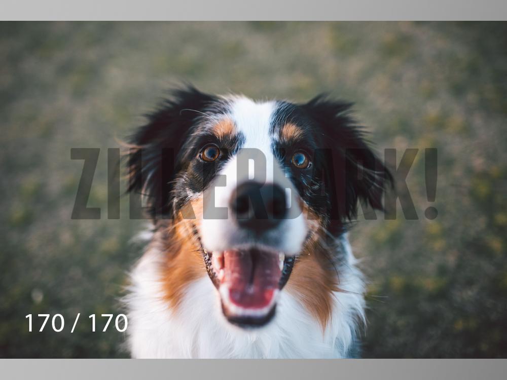 Feb Dogs-170.jpg