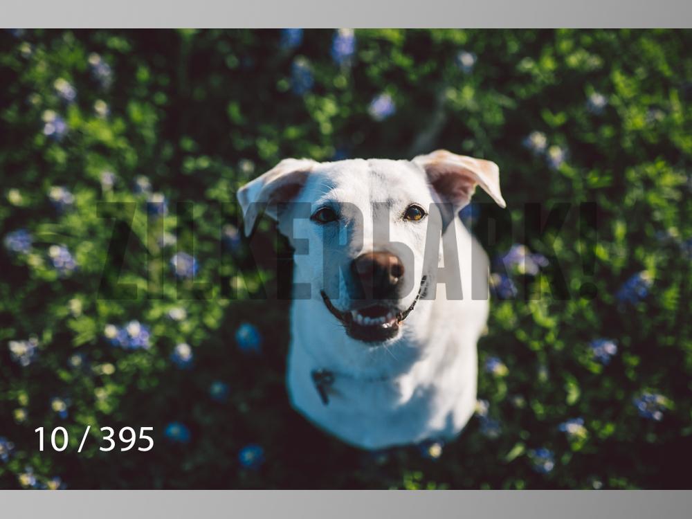 Bluebonnet wm-010.jpg