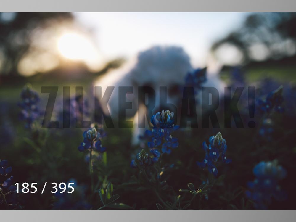 Bluebonnet wm-185.jpg