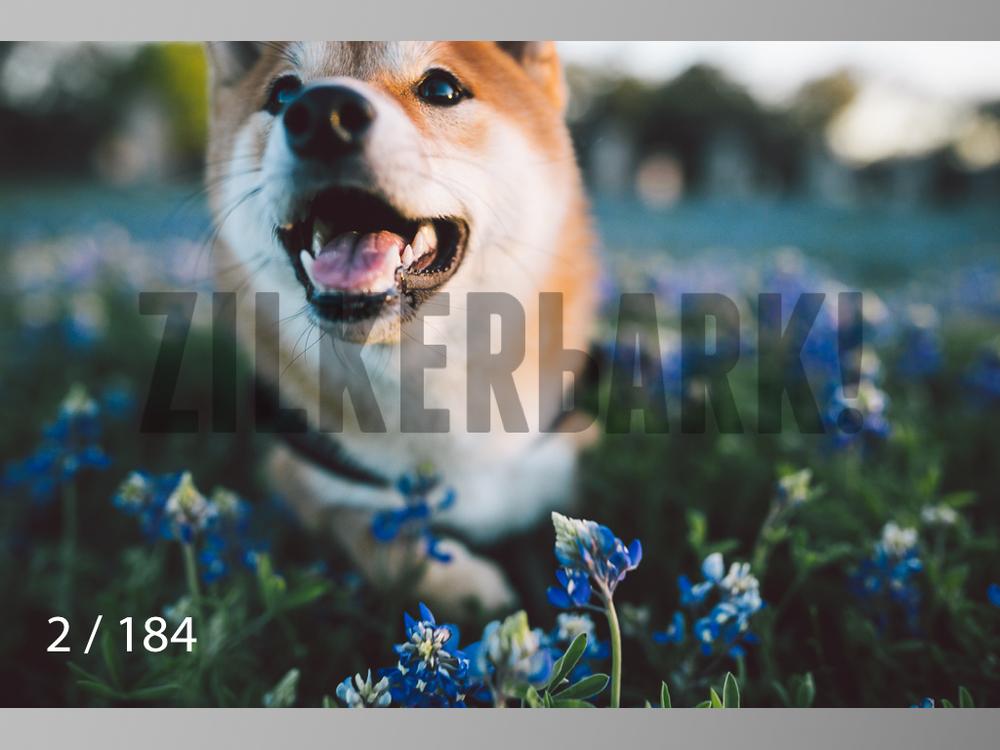bluebonnet-002.jpg