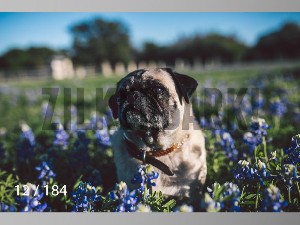 bluebonnet-012.jpg