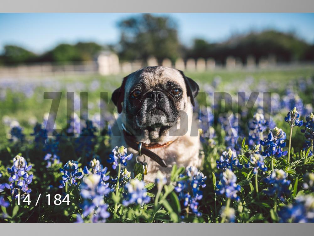 bluebonnet-014.jpg