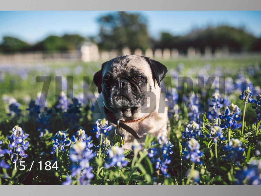 bluebonnet-015.jpg