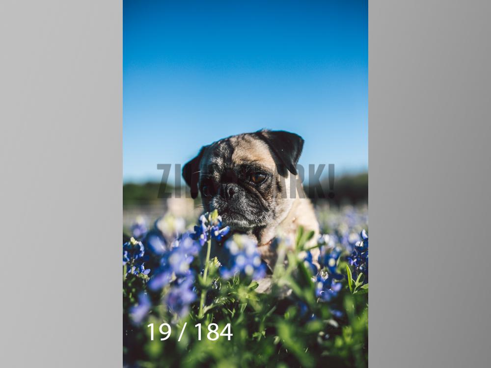 bluebonnet-019.jpg