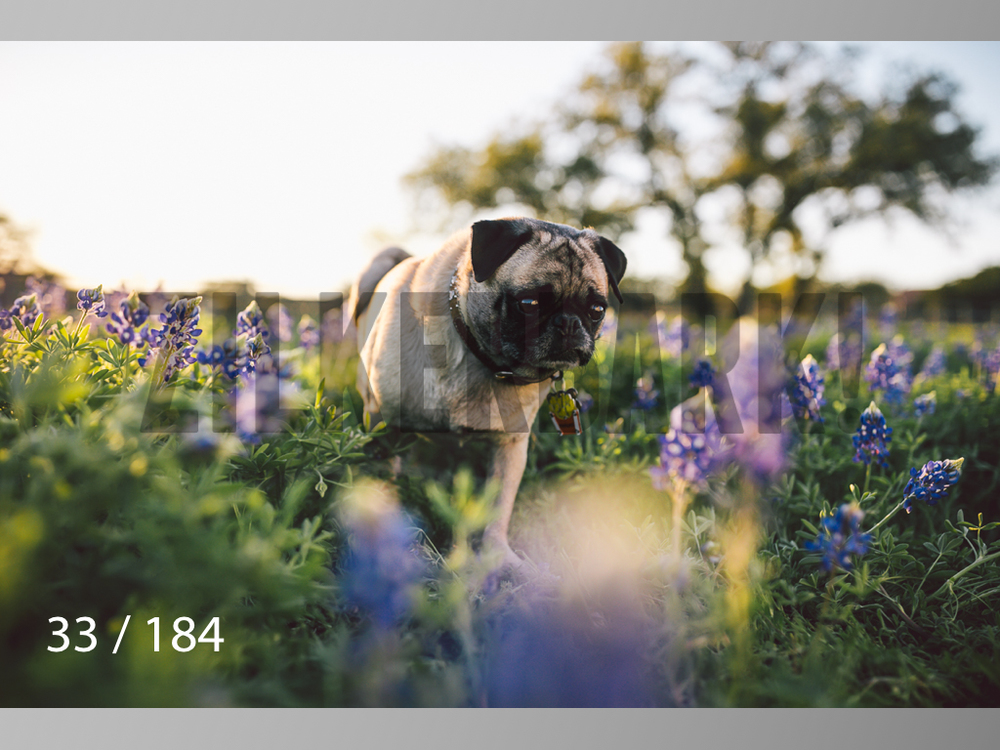 bluebonnet-033.jpg