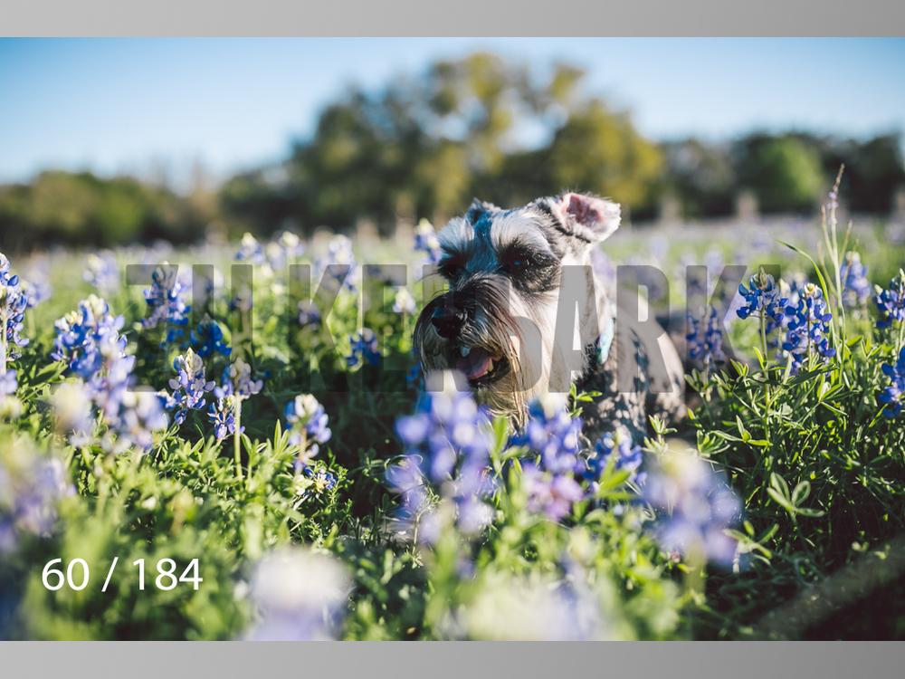 bluebonnet-060.jpg