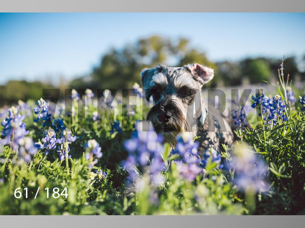 bluebonnet-061.jpg